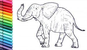 Animal Drawing Class